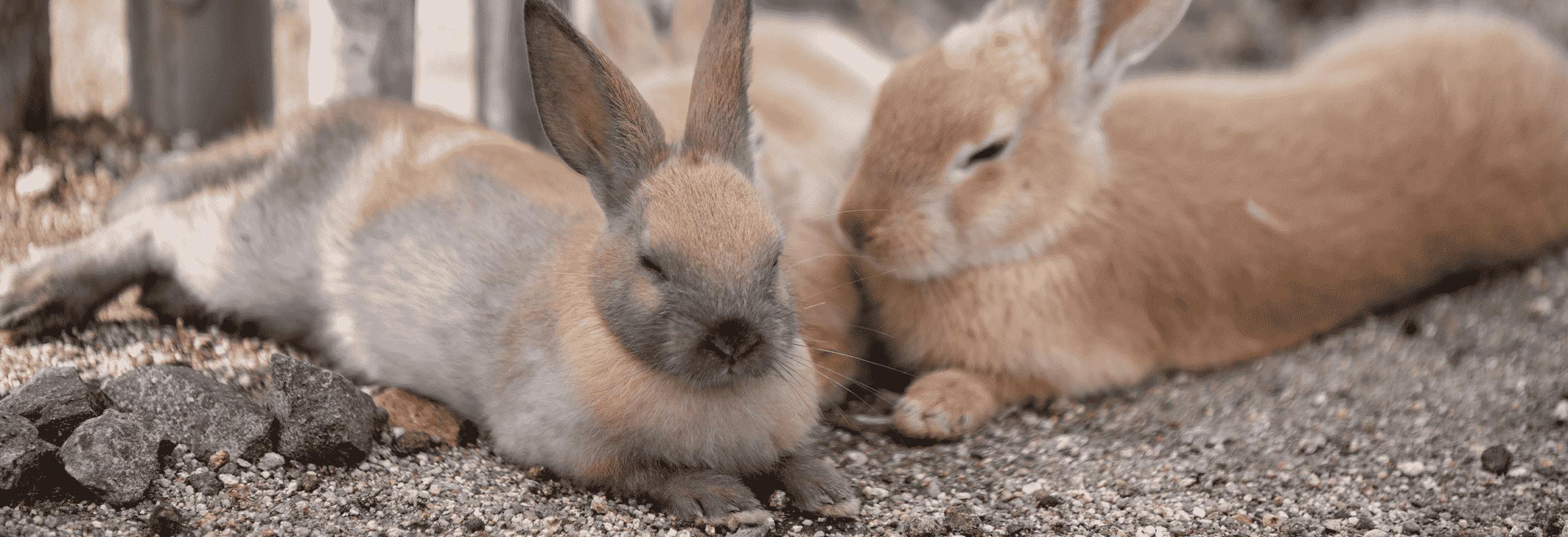 hoe slapen konijnen