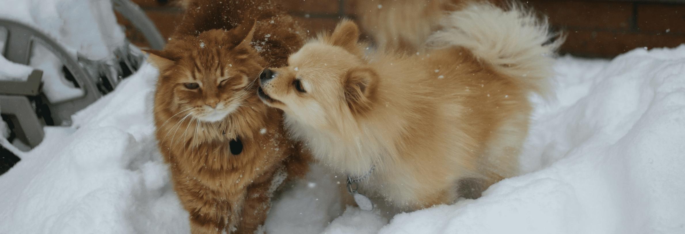 hulp aanschaf van je huisdier