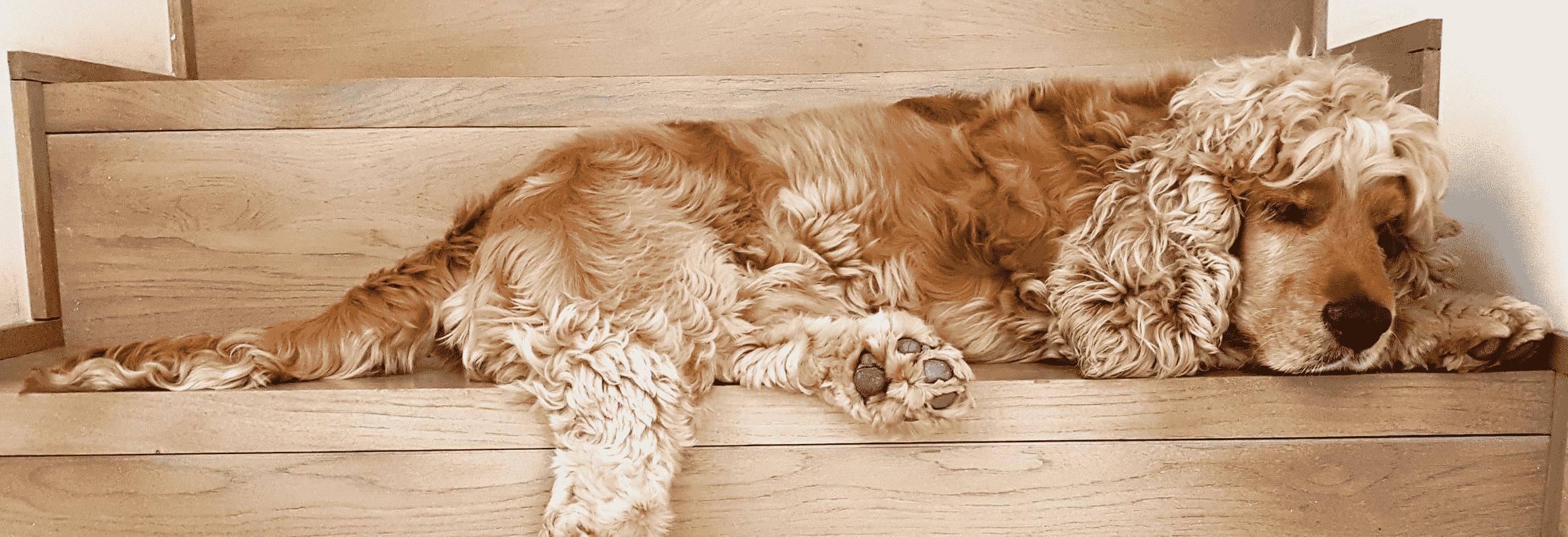 spoelworm bij de hond