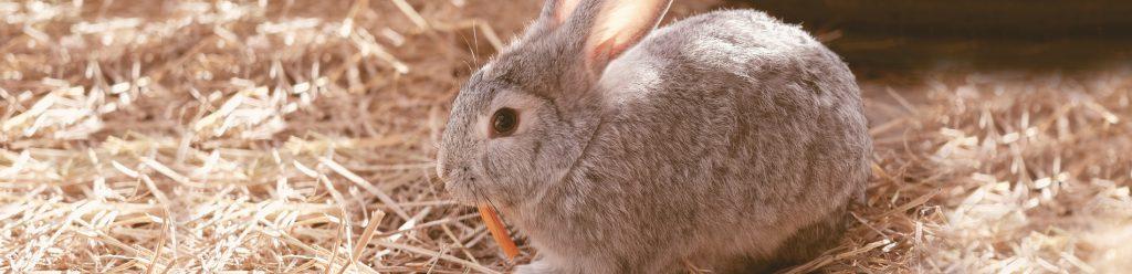 territorium konijn