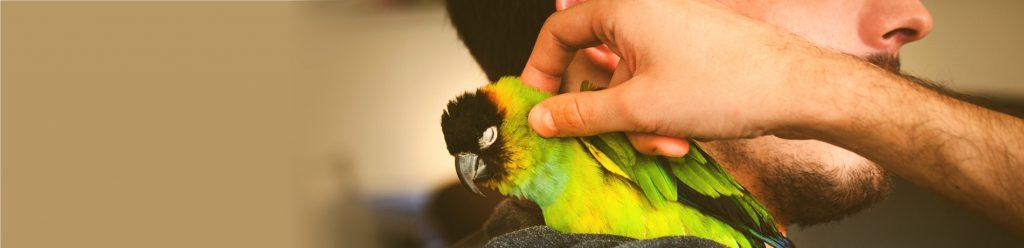 Papegaai als huisdier