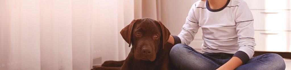baarmoederontsteking hond