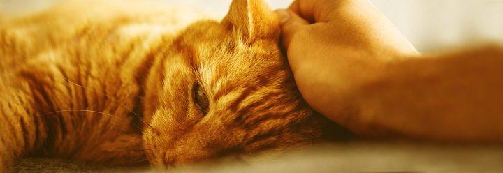 kat braakt