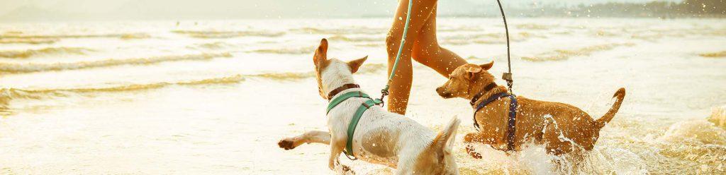 hond aan de lijn leren lopen