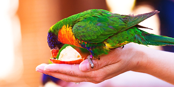 kosten papegaai