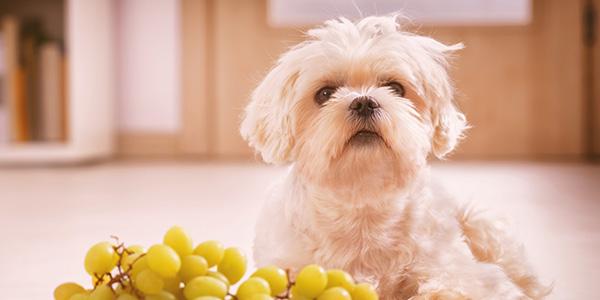 fruit voor honden