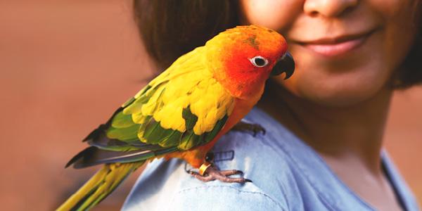 papegaai op schouder