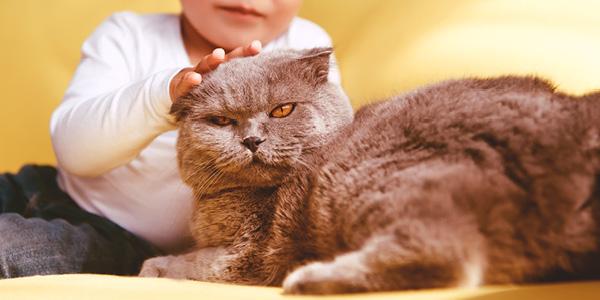 erfelijke afwijkingen kat