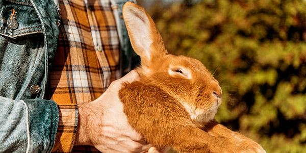 kunnen konijnen overgeven
