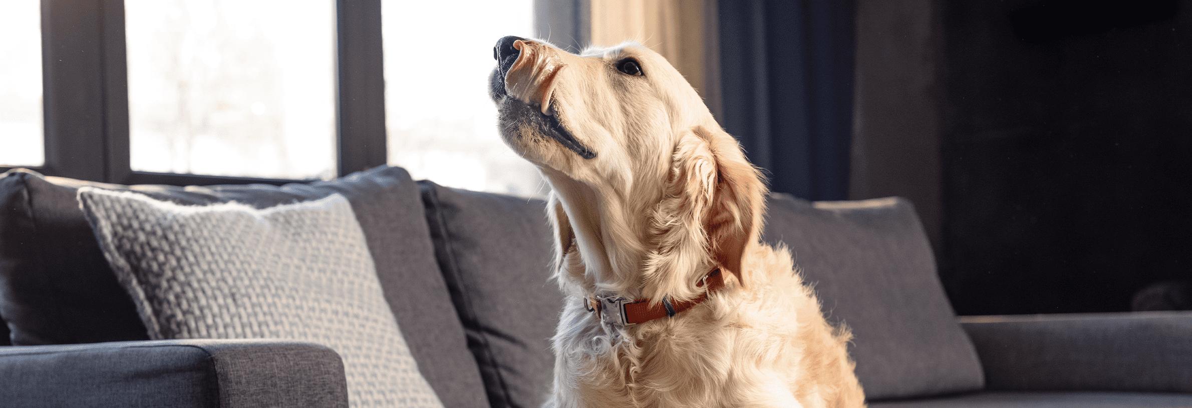 kennelhoest bij honden