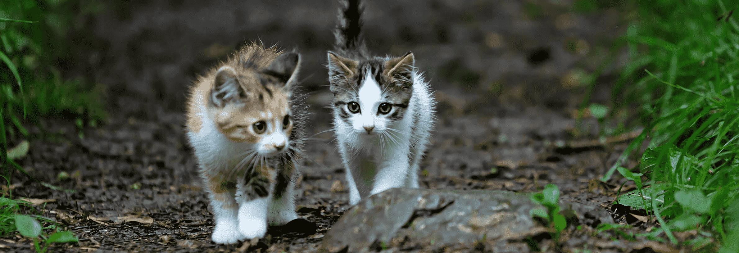 kitten naar buiten de eertse keer