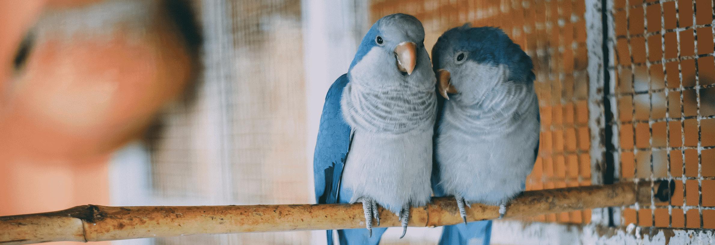 papegaaien ziekte