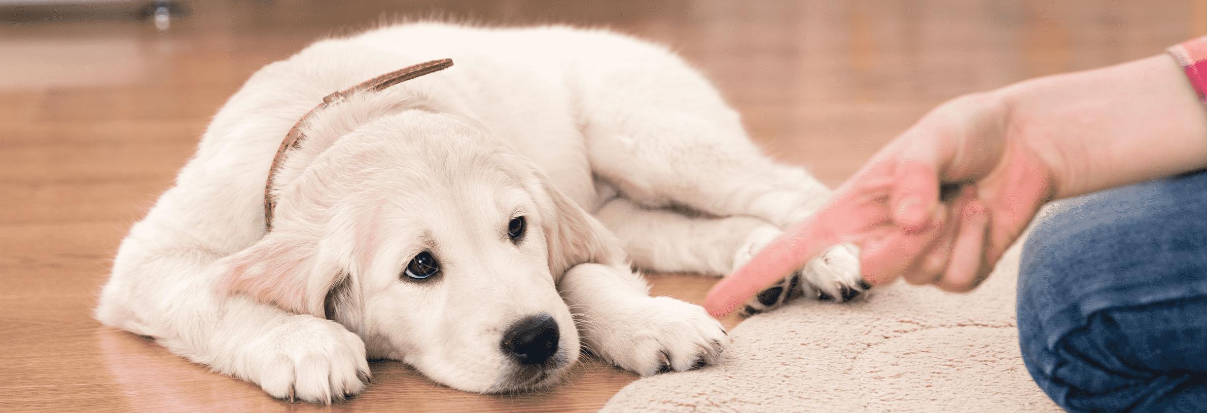 puppy gedrag corrigeren