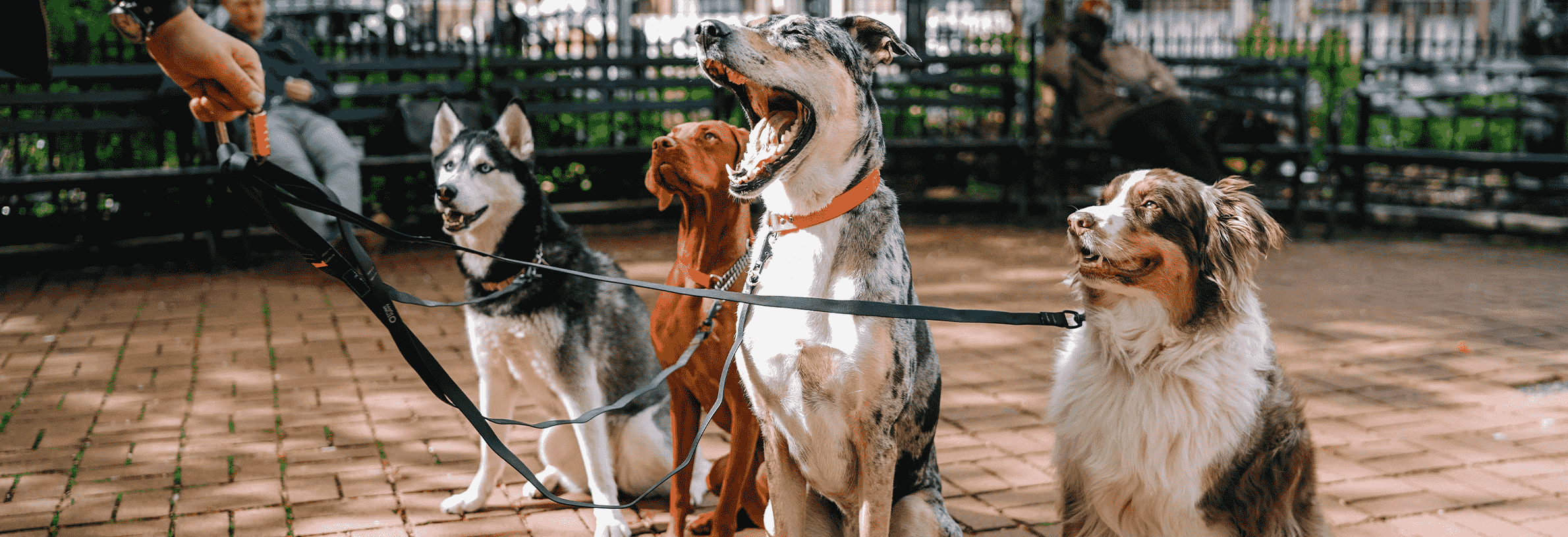staar bij honden
