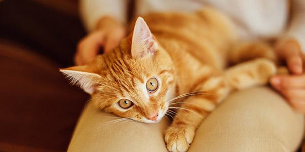 blaagruis blaasstenen kat
