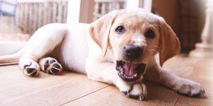 puppy gedrag