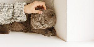 verstopping bij de kat