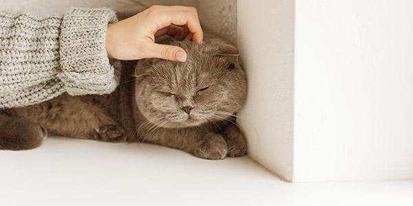 kat begroeten