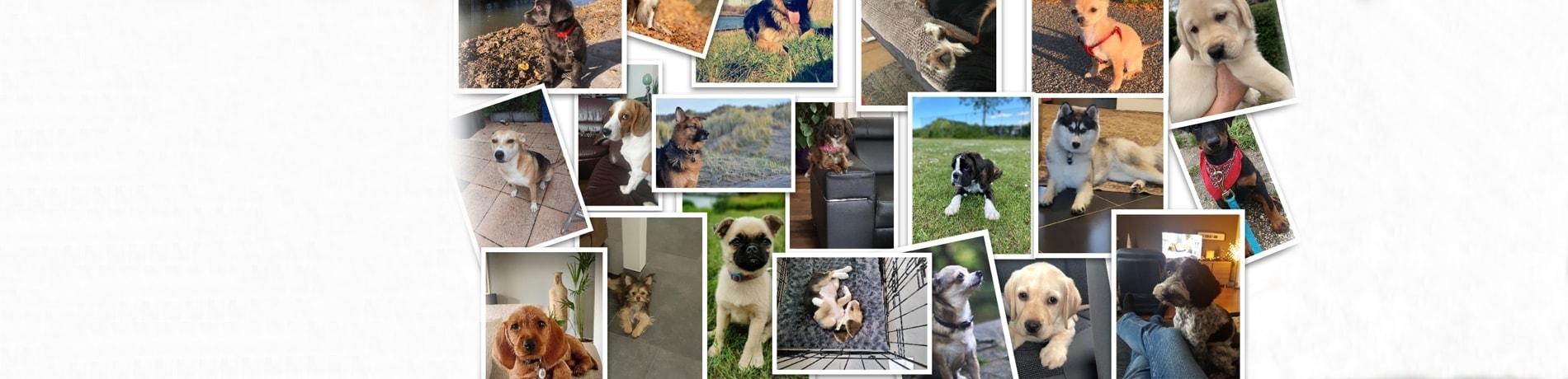 populaire hondennamen