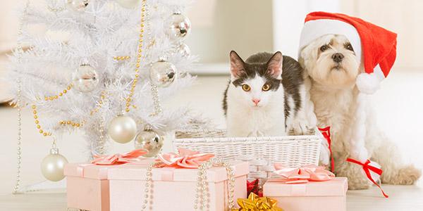 huisdier feestdagen