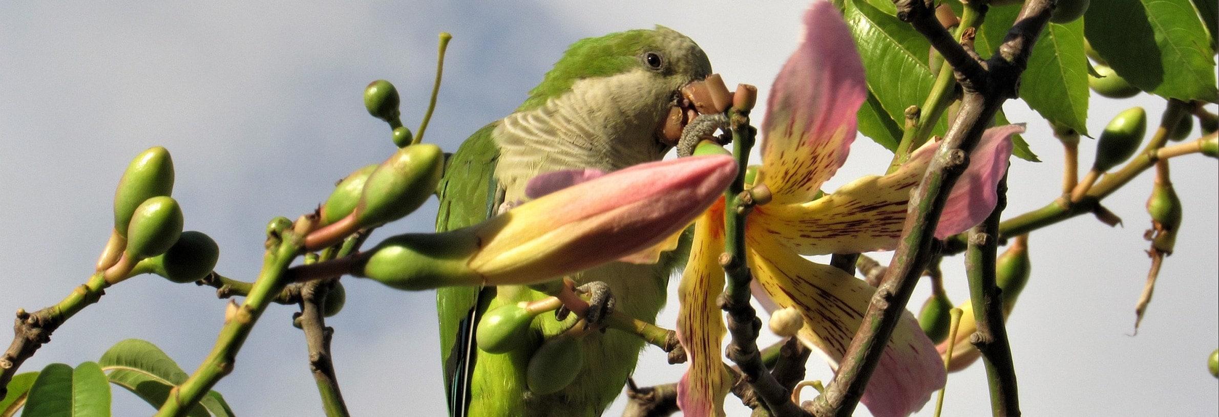 giftige planten voor vogels