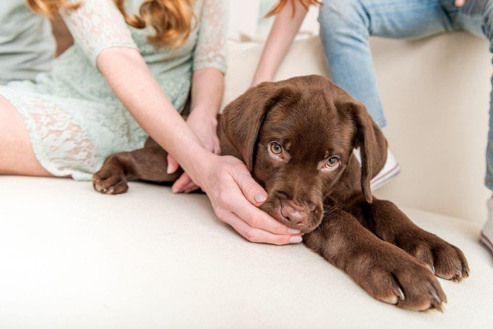inentingen hond