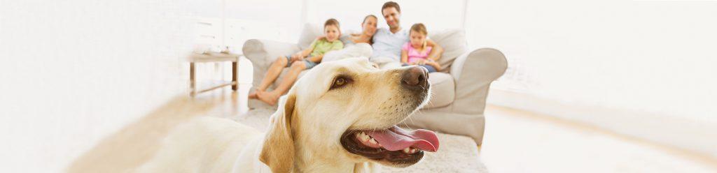 hond gezin