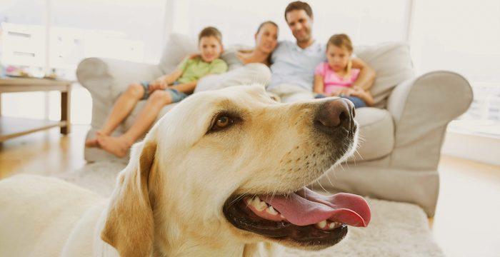 hond familie