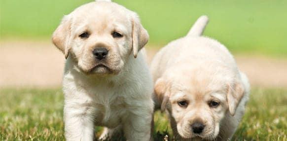 Verzekering met zorg samengesteld door dierenartsen