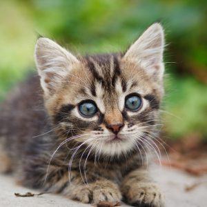 verzeker je kat vroeg mgv