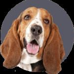 Huisdierenverzekering voor honden