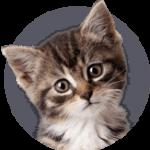 huisdierenverzekering voor katten