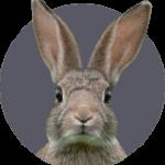 huisdierenverzekering voor konijnen