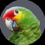 huisdierenverzekering voor papegaaien