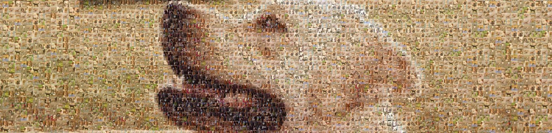 mozaiek honden