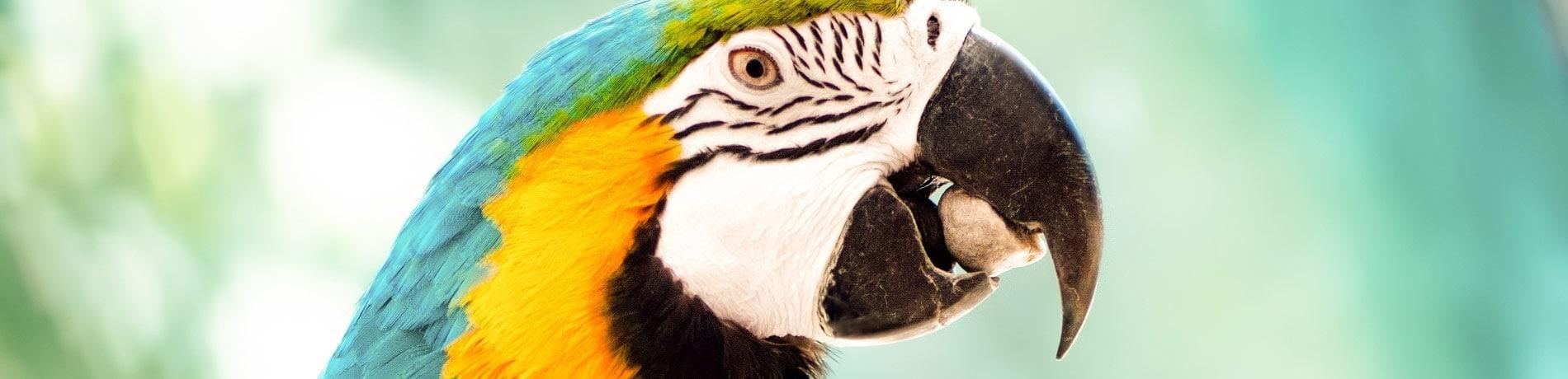 papegaai eten