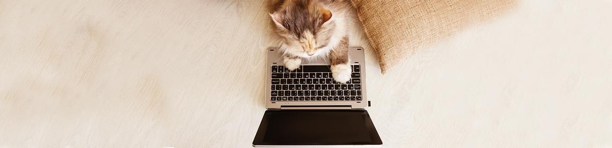 kat laptop