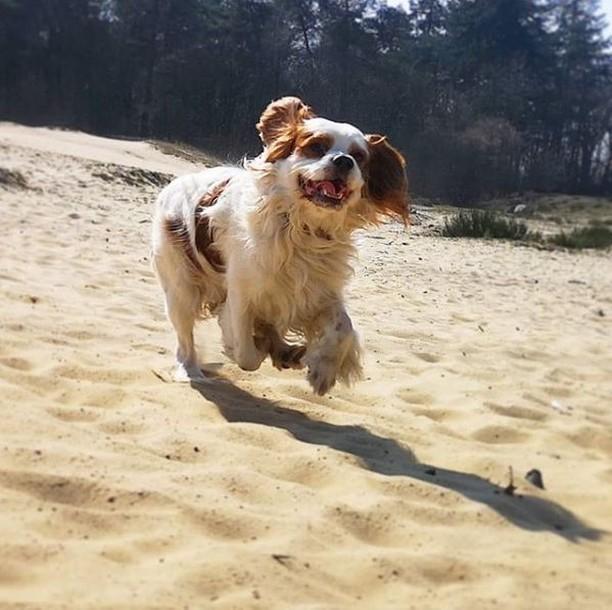 hond speelt op losloobgebied strand