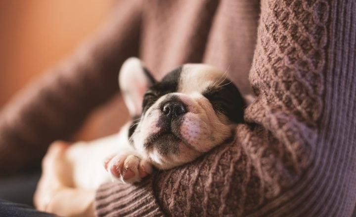 verlatingsangst bij hond