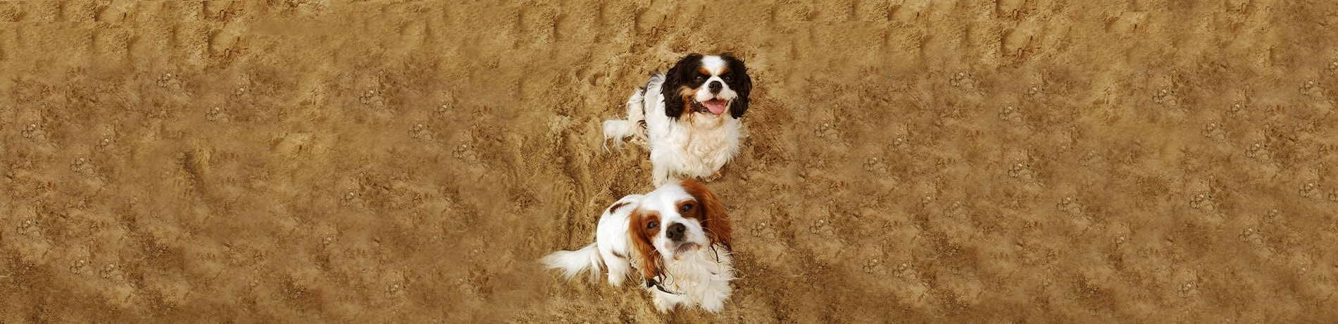 header interview dogfluencer