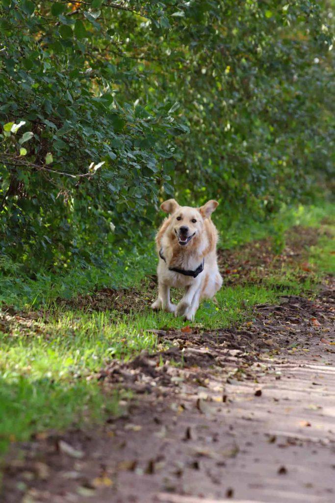 hond rent los door losloopgebied natuurgebied