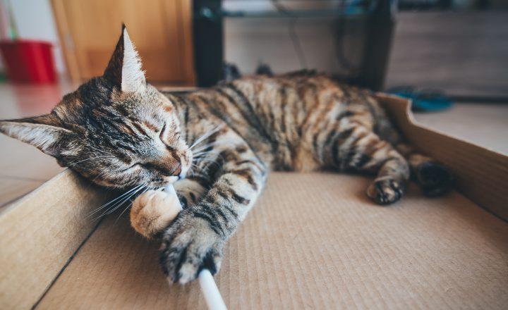 verveling kat
