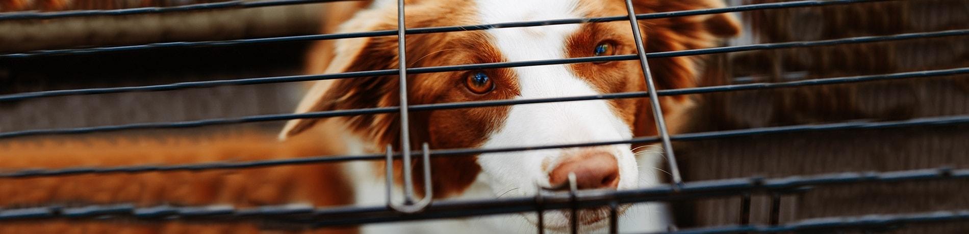 benchtraining header, hond in zijn bench