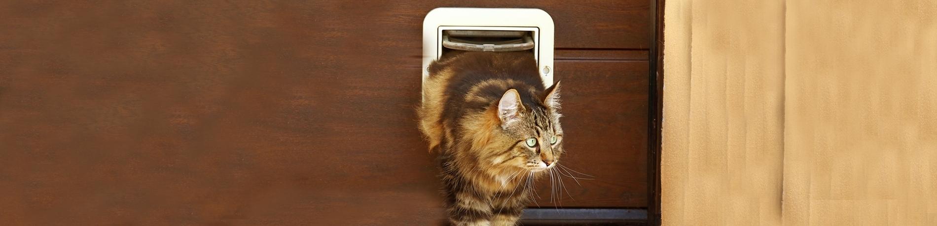 kat leren door kattenluik te gaan