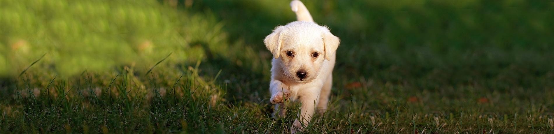 eerste dagen met je puppy