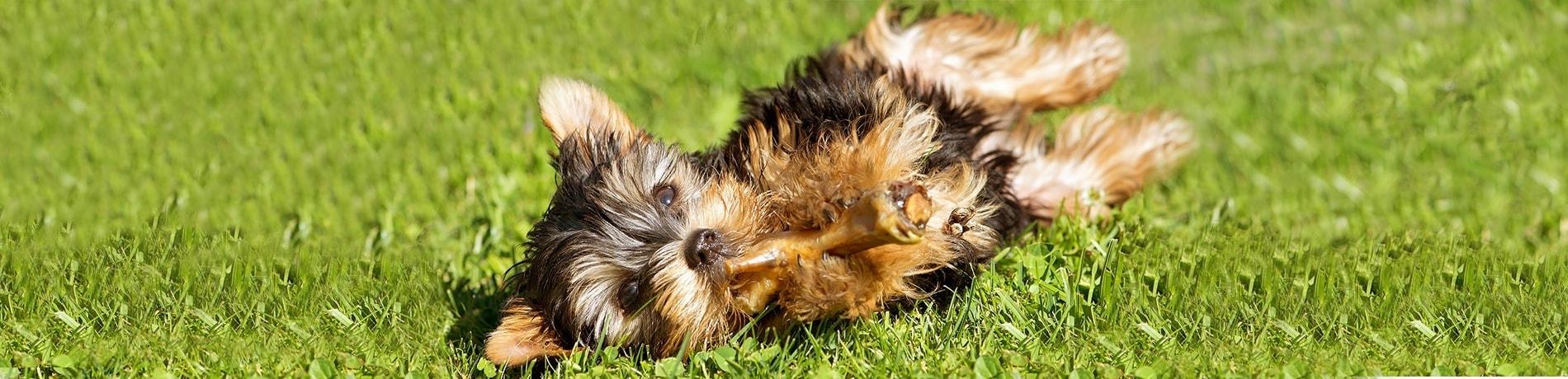 puppy benodigdheden
