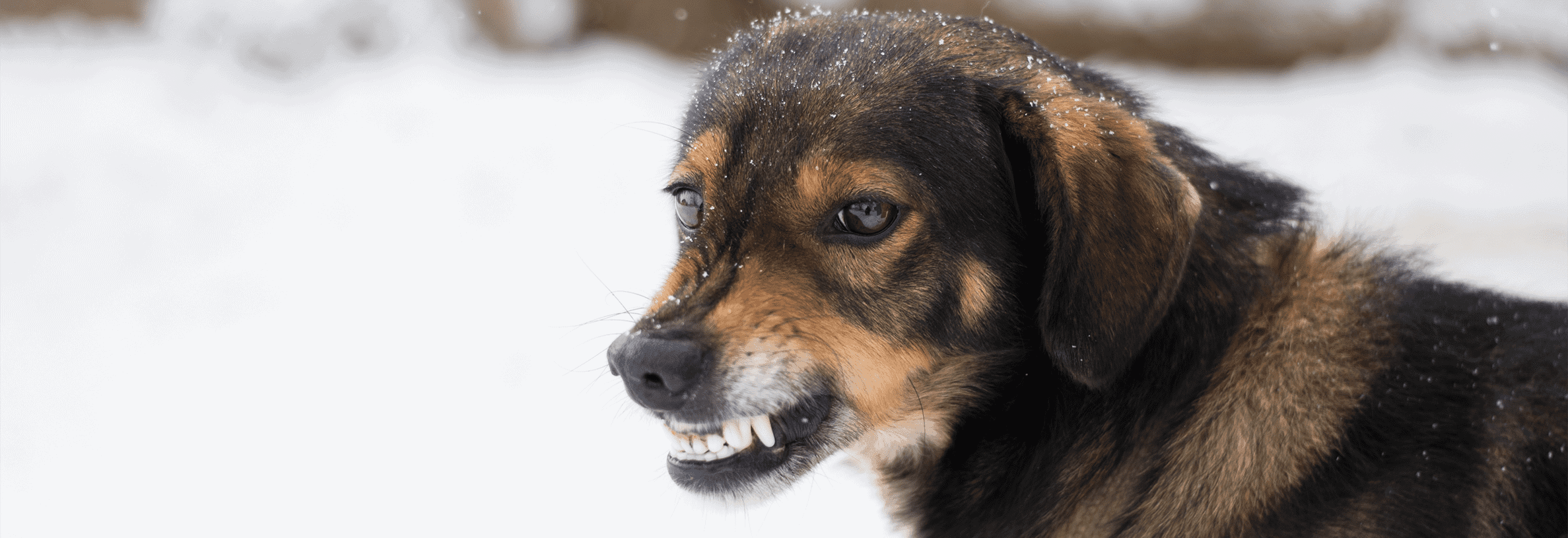 Mijn hond gromt