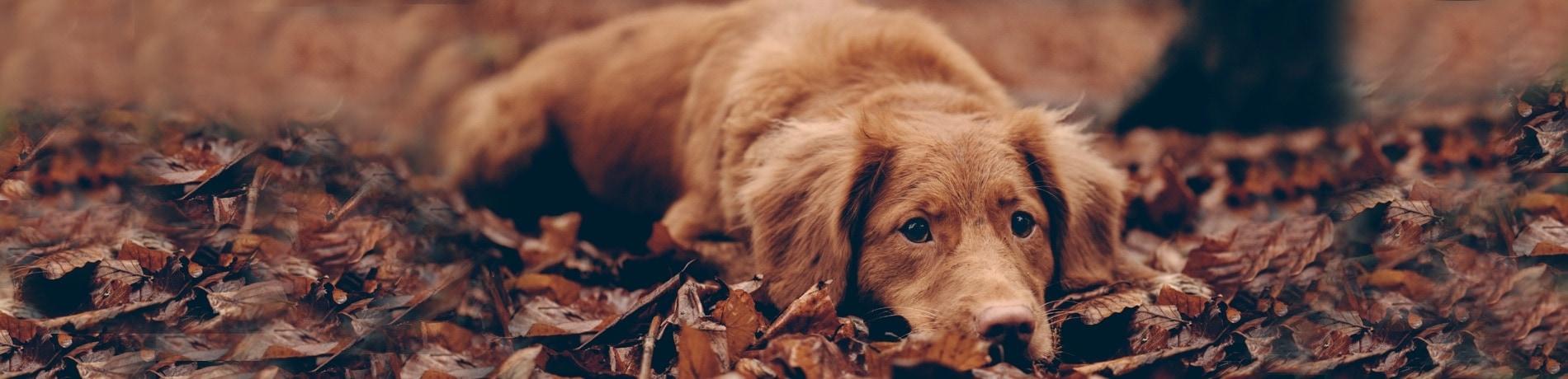 Honden eten eikels