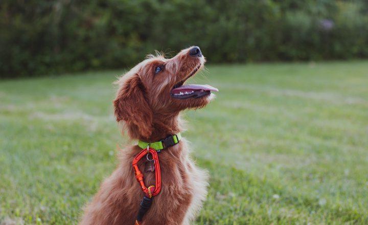 Hond corrigeren
