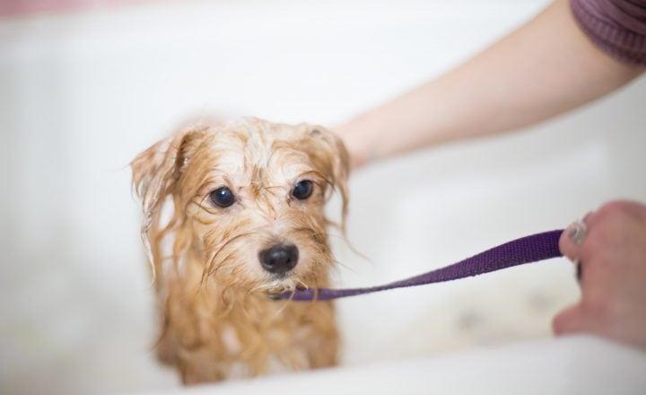 Puppy wassen